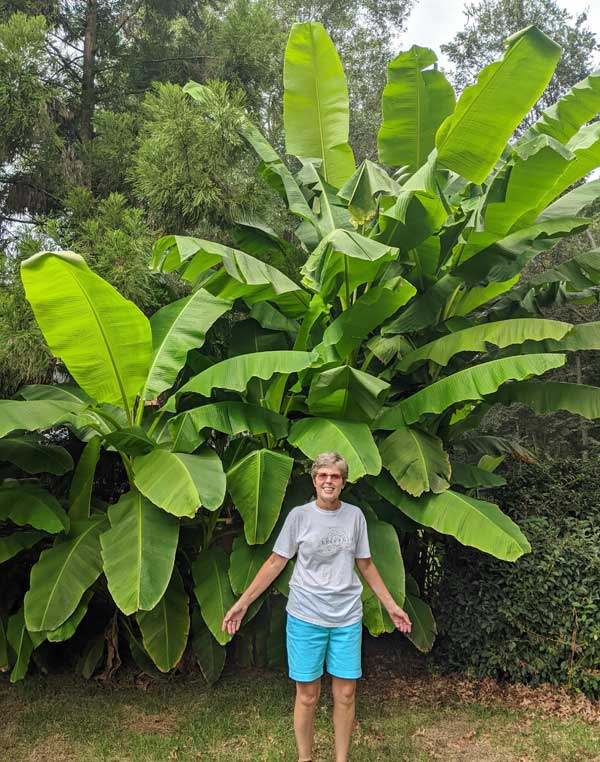 Banana Privacy Trees
