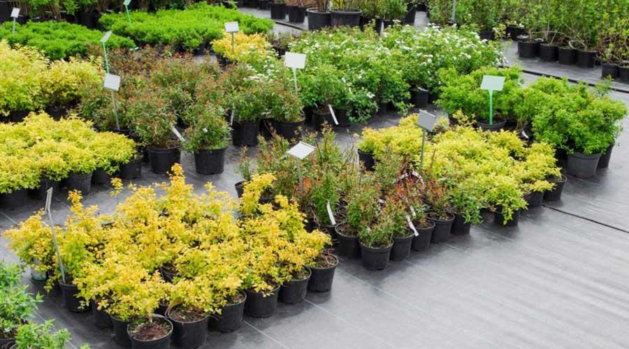 Plants on nurery pad