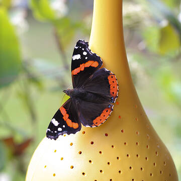Hanging Butterfly Oasis