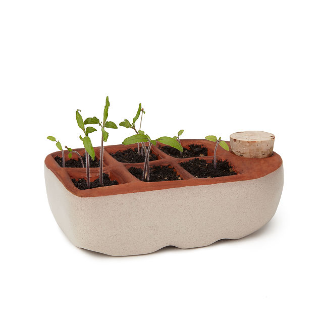 Self-watering seed starter kit