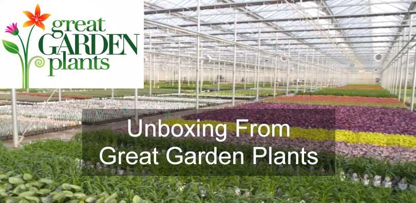 Great Garden Plants Unboxing